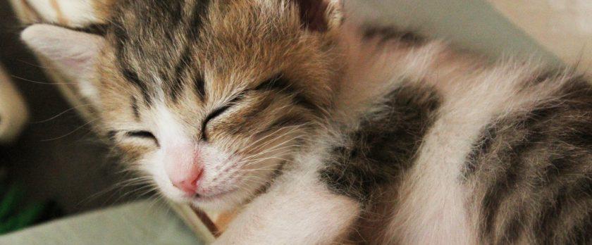睡眠不足と衝動買い